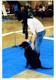 CURLY COATED RETRIEVER - Zuchtstation