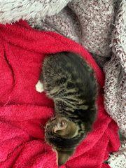 Kitten Rassenmix