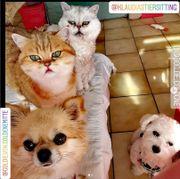 Geprüfte Katzen- Hundebetreuung mit HUTA