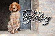 Darf Toby für Sie seinen