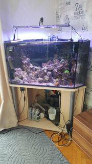 Aquarium Auflösung Lebendgestein