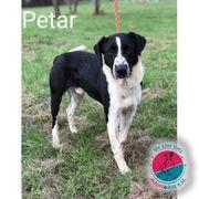 Petar - wünscht sich trotz Handycap
