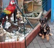 Junghund Jive sucht ein Zuhause