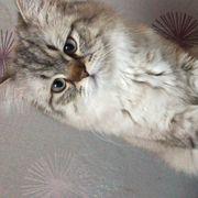 mimo ist ein schöner katter