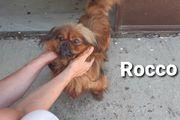 Der liebe Rocco sucht ein