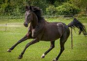 Pferd sucht souveräne Reitbeteiligung