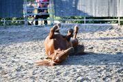 Pferdebetreuung und -versorgung