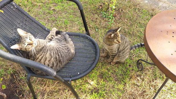 2 Katzen kostenlos abzugeben
