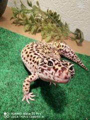 2 Leo geckos