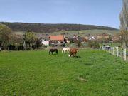 Kleiner Stall,Pferdeboxen,