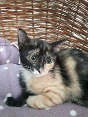 Mädchen Mheta 4 Monaten alt