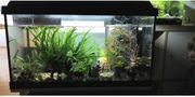 Aquariumpflanzen Wurzel bepflanzt Garnelenröhren bepflanzt