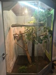 Terrarium Groß mit Grünem Leguan