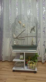 Kanarienvögel samt Käfig und Untergestell