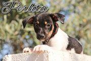 Perlita sucht nach neuer Bleibe