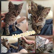 Baby Katze Kitten Hermine sucht