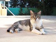 MERCURIO - Mag Hunde und Katzen