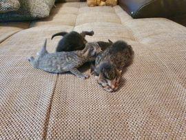 5 süsse Katzenbabys Mix