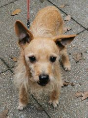 Der wundervolle Hundeopa Rudi sucht