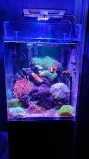 Meerwasseraquarium Hobbyaufgabe Komplett