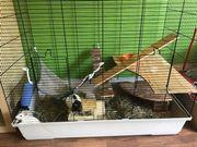 Rattenkäfig mit Tieren