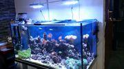 Meerwasseraquarium 120x60x60 Komplett Korallen Technik