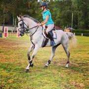 Verk Allrounder Pferd