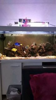 Meerwasser Aquarium 450l Becken mit