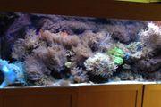 Aquarium Lampe LED Vertex Illumina