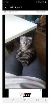 verkaufe meine Katze sie ist