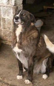 Wilmo - pflegeleichter Anfängerhund
