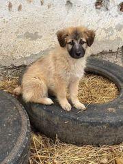 Hundekind ENA sucht ein Zuhause
