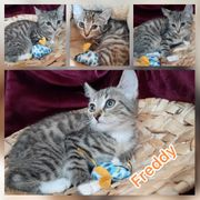 Kitten Baby Kater Freddy geimpft