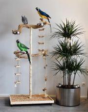 FREISITZ aus Holz Papageienfreisitz 1