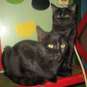 Black Beautys Charlie und Luna