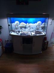 Juwell Aquarium mit Unterschrank