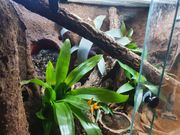 Regenwaldterrarium 60x50x50