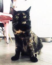 MISSY - fröhliches Katzenkind