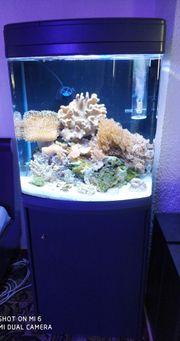 Sera Cube 130 LED Meerwasseraquarium