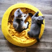 Körbchen Schlafsäcke für Katzen u