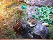 3 Prachterdschildkröten