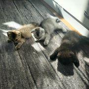 Kätzchen suchen neues Zuchause