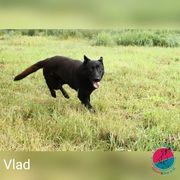 Vlad - Mimt gerne den klassischen