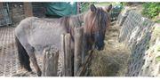 Pferdeoma sucht neues Zuhause für