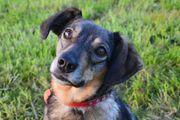 Liebevolle junggebliebene Hunde - Omi gesucht