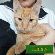 Tommy Kater aus dem Tierschutz