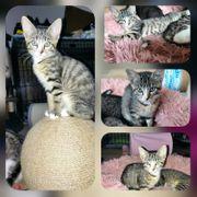 Baby Katze Kitten Leni geimpft