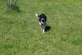 Ellen Zora - Diese Hündin will: Kleinanzeigen aus Kirchzell - Rubrik Hunde