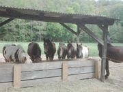 Außenboxen Pferdepension westlich von Dresden