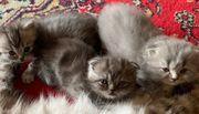 Katzenbabys Kitten